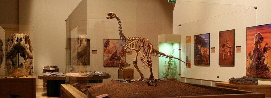 Traveling Exhibition - Hatching the Past: Dinosaur Eggs and Babies